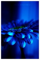 blue by werol
