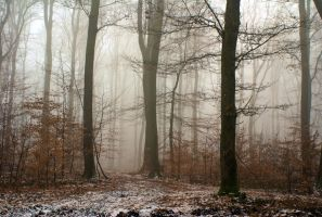 Misty forest II by LiveInPix