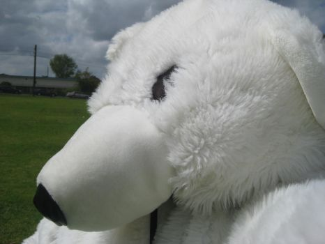 Yr 12 Muck Up Day - Pondering Polar Bear! by I-Have-A-Jar-Of-Dirt
