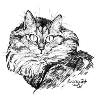 My cat 2 by BoggartOwl