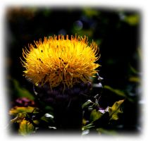 a little yellow by awjay
