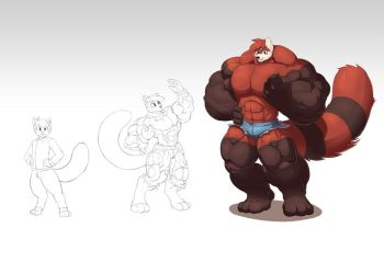 Red panda muscle growth -commission- by faogwolf
