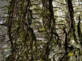 Wood Tree Bark Texture Stock by Enchantedgal-Stock