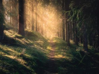 The path of light by streamweb