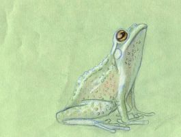 Frog by w176