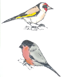 Quick finches by ClaudiaCooper
