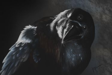 Three eyed Crow by Peresal