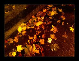 :: one of these fall nights :: by synergia