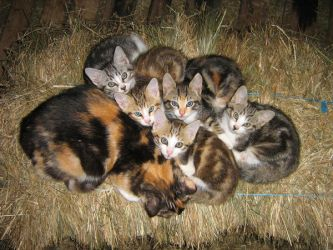 Heap of kitties by carbon-girl