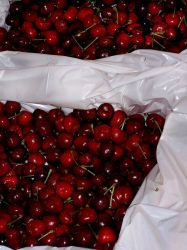 Cherries by pennyroyalxmuffin