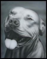 american pitbull by MPDesign