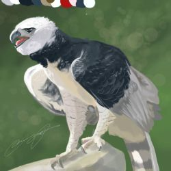 Harpy Eagle Sketch by SunStateGalleries