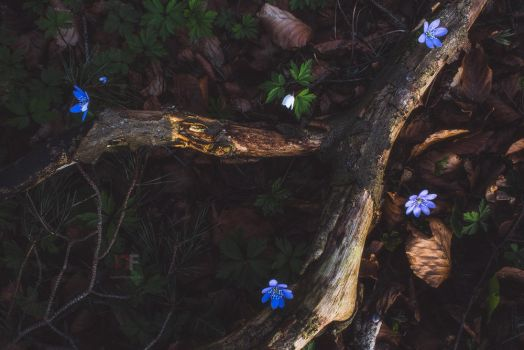 Enchanting forest floor by mescamesh