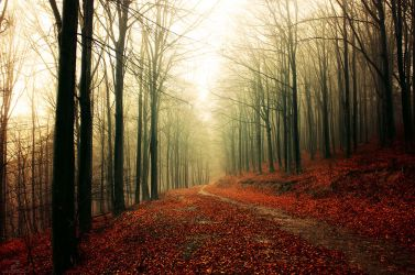 Autumn Walk XXXIII. by realityDream