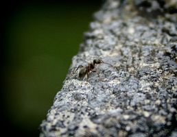 Hello Little Ant by aquifer