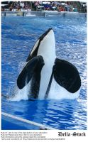 Sea World: Shamu Jump.8 by Della-Stock