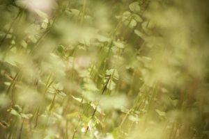 plant texture 2 by beckas