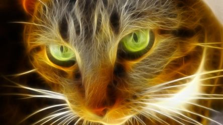 Gato fractalioso by acg3fly