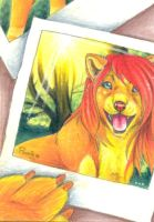 Picture Perfect - Summer Sale ACEO by PoonieFox