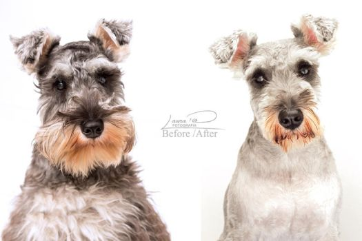 Lorenzo: Before / After by Laura-Skeff