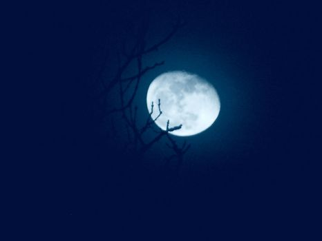 The Moon is Like a Curlew by GilesWatson