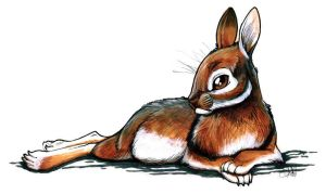 lounging cottontail by pyrokeet