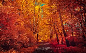 The colors of Autumn - Part I by myINQI