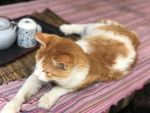 Cat in YunNan by AndrewNeon