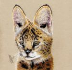 Serval Cub by lonely-wolf-22