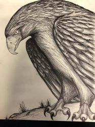 Golden Eagle by conwaysuccess