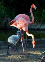 Baby Flamingo by Toniasis