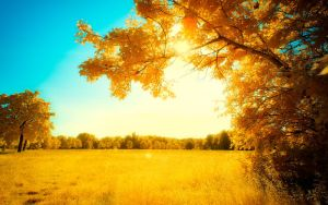 Yellow Trees Part VIII by myINQI