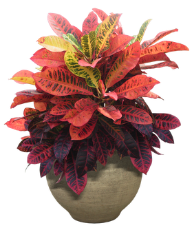 plant png 14 by DIGITALWIDERESOURCE