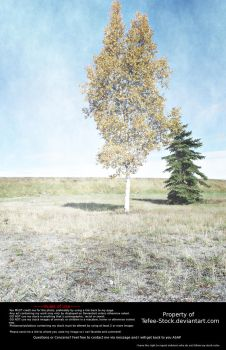 Yellow Tree Field Background Stock by Tefee-Stock