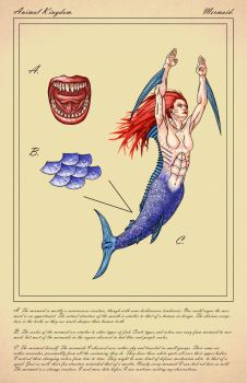 Scientific Illustration - Mermaid by xX-Mr-No-Name-Xx