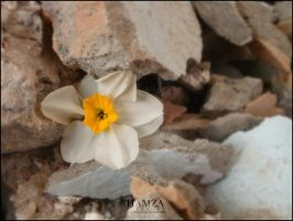 a flower in war by iraqson