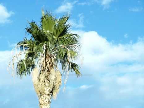 Backyard Palm Tree by Collective-Humanity