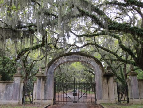 Wormsloe Entrance by Molebut