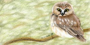 Little Owl by Delinlea