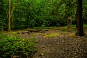 Hainault Forest, 04/09/14. by LouHartphotography