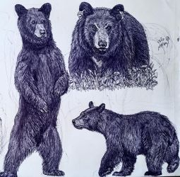 Black Bears by MickeyRayRex
