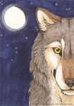 Wolf's moon ACEO by Bear-hybrid