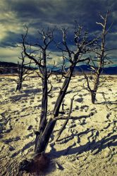 Mammoth Springs, Yellowstone by lepersabstain