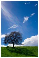 tree.with.flare by altjeringa
