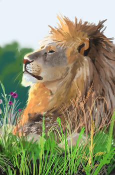 Lion study by Hoowy