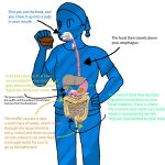 The Digestive System by badgerflight