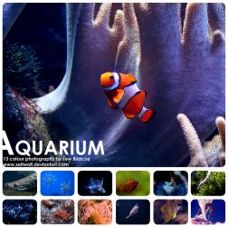 Aquarium Calendar by Zeitwolf