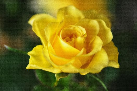 Yellow Rose on Canvas by Tailgun2009