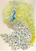 Peacock by Pinkutti
