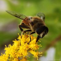 Little Bee by chriscol